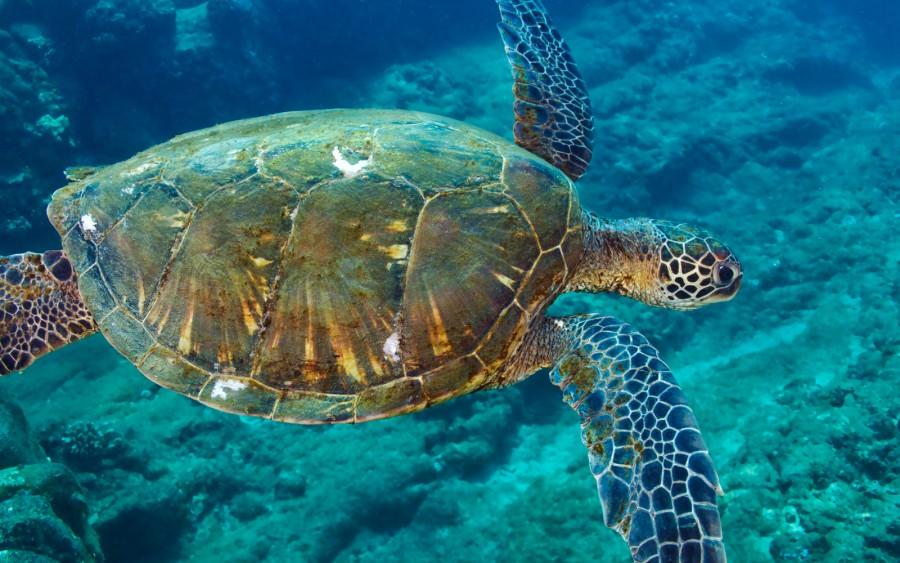 Turtle! Turtle! 107